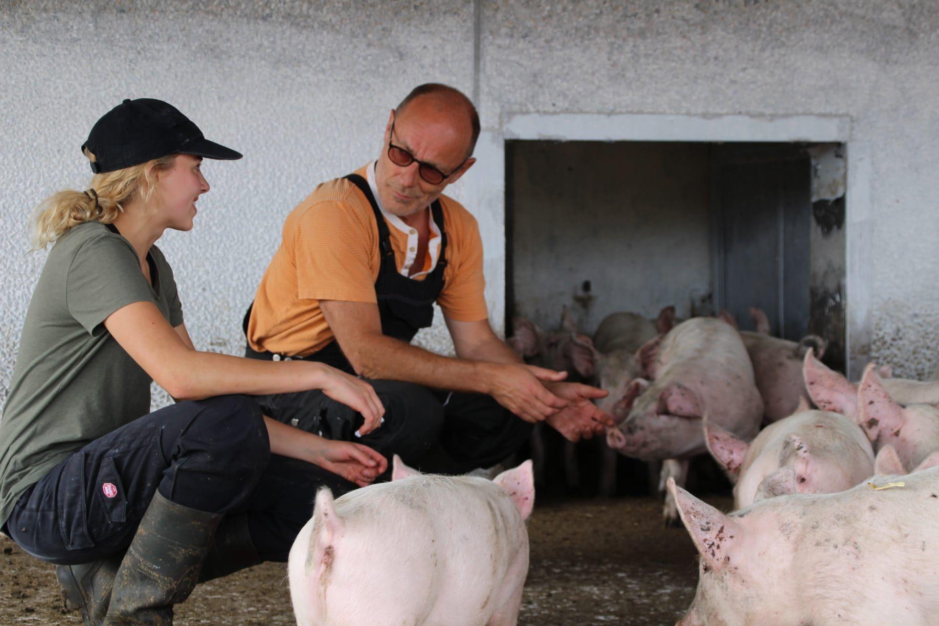 Dyrlæge Niels Peter snakker med tidligere elev Esther M Bertelsen om slagtegrise