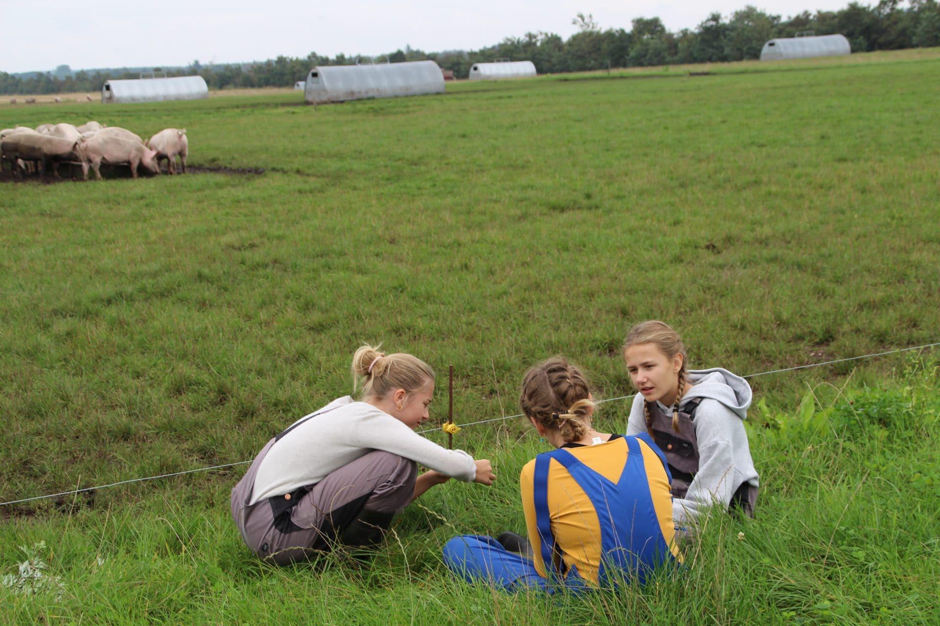 Piger fra Hellerup passer øko grise