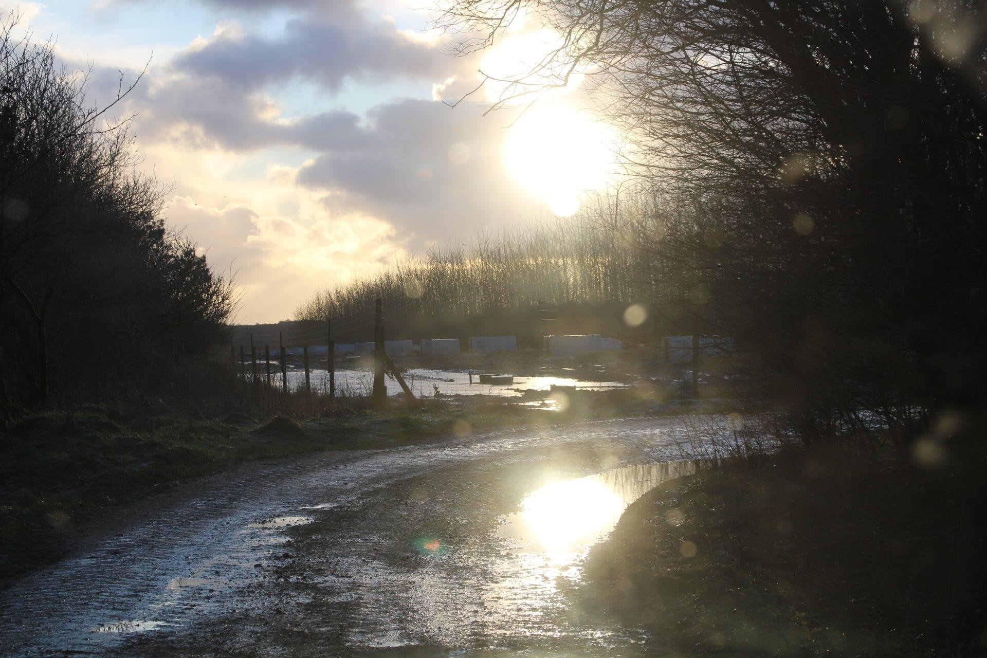 Frost solskin og is på vandpytterne