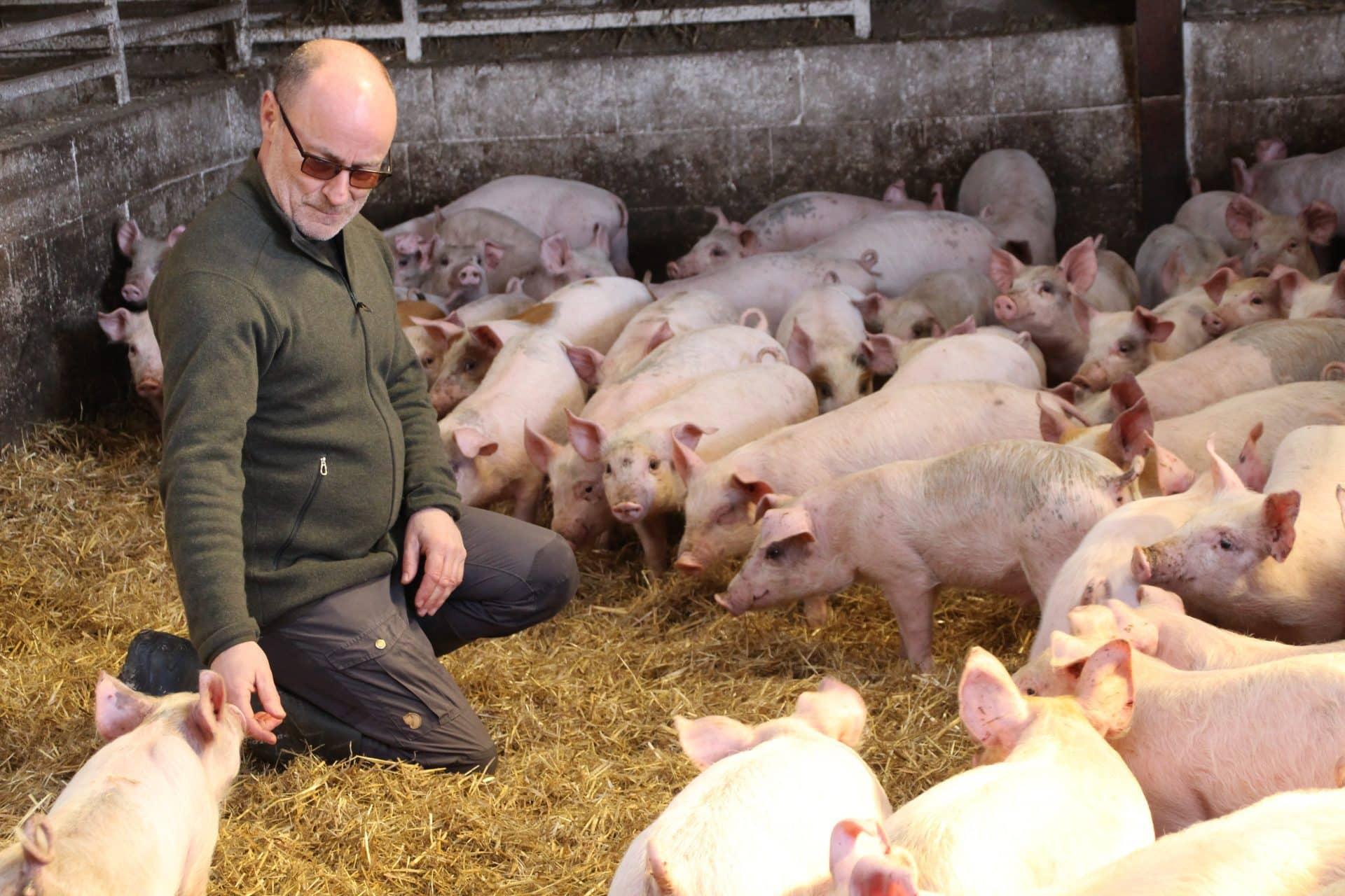 Dyrlæge Niels Peter tilser slagtegrise